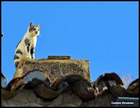 http://santamartak-amina.blogspot.com.es/2017/03/los-barruecos-12-03-17-fotos-de-casimiro.html