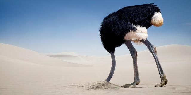 La politique de l'autruche : quand l'éducation nationale a la tête dans le sable concernant le harcèlement scolaire