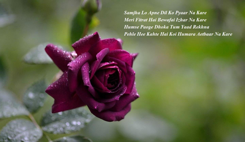 dhoka shayari in hindi for love