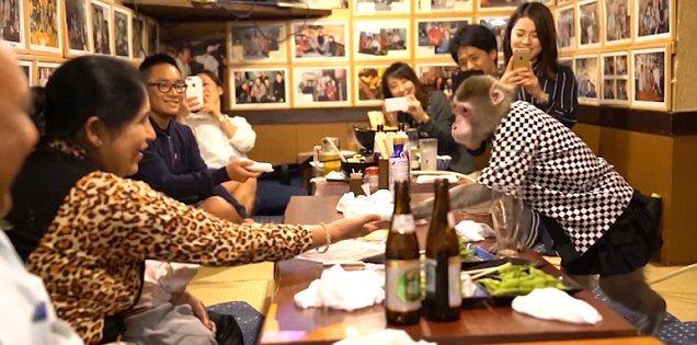 Unik, Pelayan Kedai Di Tokyo ini Dua Ekor Monyet
