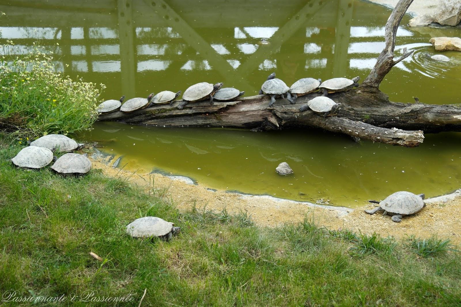 tortues chez planètes sauvages