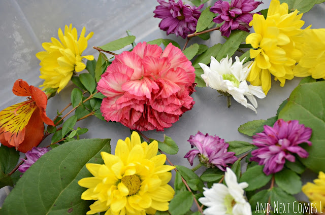 Spring sensory bin with fresh flowers