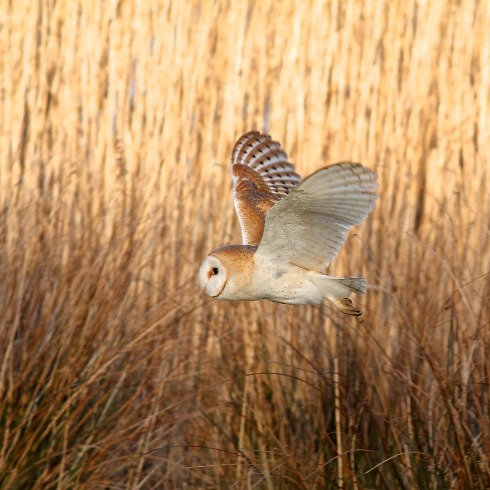 TrogTrogBlog: End of year favourites - Non-garden birds