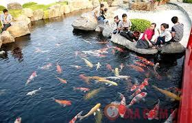 Tham quan Công Viên Cá Koi Rin Rin Park tại - Vườn Nhật Bản cực đ7ã