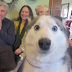 21 Dogs Who Mastered The Art Of Photobombing
