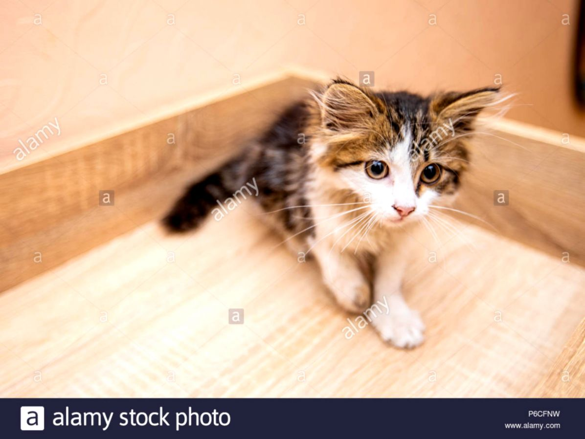 A little funny kitty with big eyes Stock Photo 210488149 Alamy