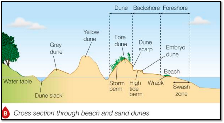 an introduction to the analysis of the beach dune erosion Cornwall beach and dune management  44 new shoreline and beach profile analysis  and beaches around ornwall's coast are currently experiencing erosion and.