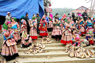 Bac ha tour