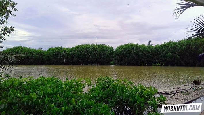 Demang Gedi Hutan Mangrove Purworejo