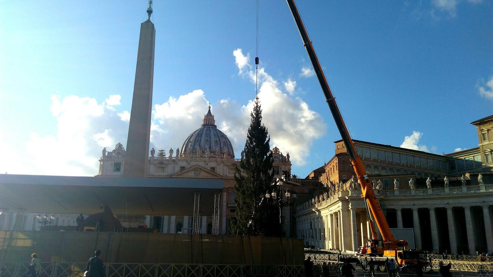 Piazza San Pietro arrivato lalbero di Natale