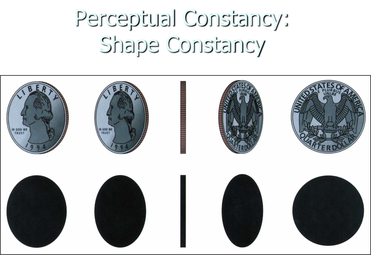 1BerryCarusoMitchell: Perceptual Constancies- Law of Shape