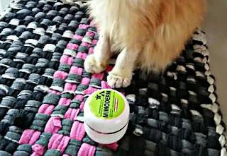 salep khusus mengobati scabies pada kucing