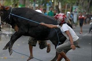 sebagai peternak sapi mungkin tidak awam dengan istilah sapi gila Kabar Terbaru- SELUK BELUK PENYAKIT SAPI GILA