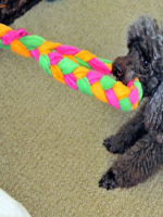 http://www.muyingenioso.com/juguete-de-tela-para-nuestro-perro/