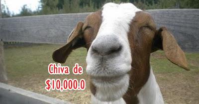 Chiva de 10000 pesos