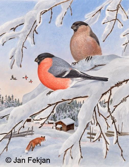 Bilde av digigrafiet 'Dompaper'. Digitalt trykk laget på bakgrunn av et maleri av fugler i vinterlandskap. Illustrasjon av to dompaper, Pyrrhula pyrrhula, som sitter på en bjørkekvist. I bakgrunnen er det en rev som lister seg mot en gård, og andre dompapper som flyr mot en klar vinterhimmel. Bildet er i høydeformat.