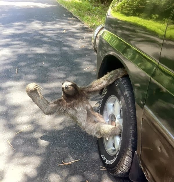 Funny animals with Sleuth On Wheels .