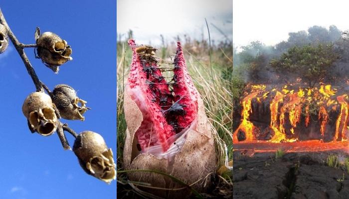 10 Foto Bagaimana Alam Bisa Membuat Kita Takjub Sekaligus Merinding