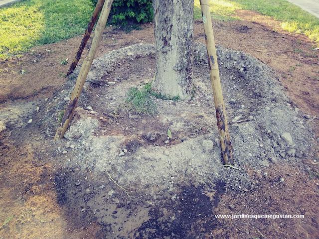 Hoyo de plantación
