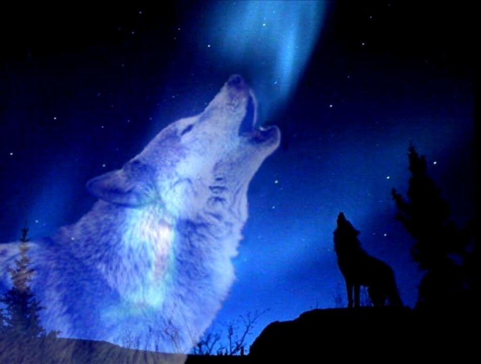 wolves howling wallpaper innovationgroup