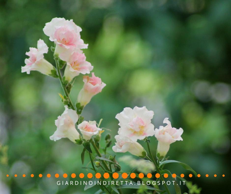Lavori di giugno in giardino nuovi acquisti e nuove talee - Lavori in giardino ...