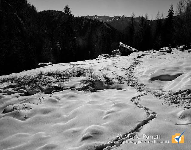 Tracce  sulla neve all'alpe Villasco