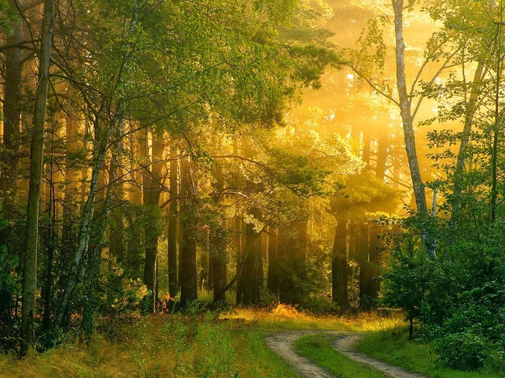 Pozadine Za Desktop Priroda Predivan Sunčani Dan U šumi