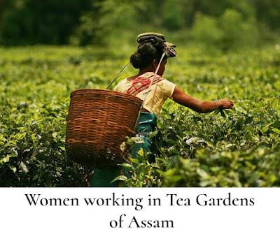 Wage Compensation Scheme for Pregnant Women in Assam