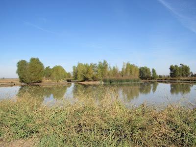 Llano Seco Unit