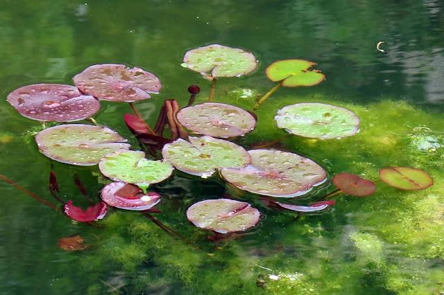 Renoir s Garden