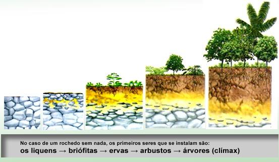 Comunidade em Ecologia