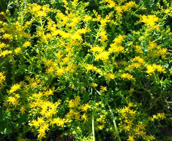 amarelo, verde, flores
