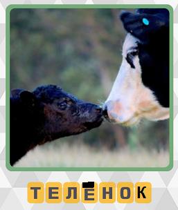 корова обнюхивает своего теленка носом на 1 уровне в игре 600 слов