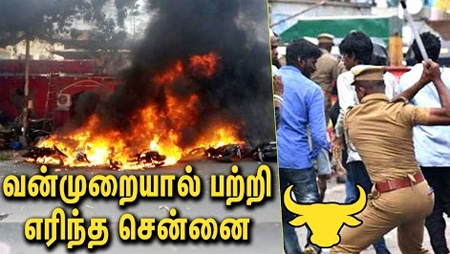 Jalikattu Protests in Chennai Turn Violent