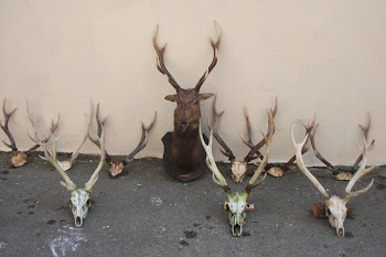 Sika heads from 2009/2010