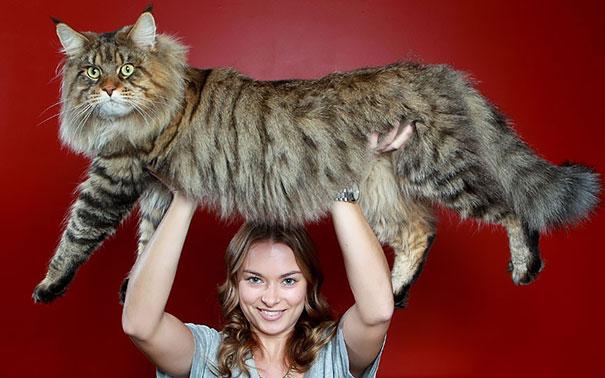 gato gigante