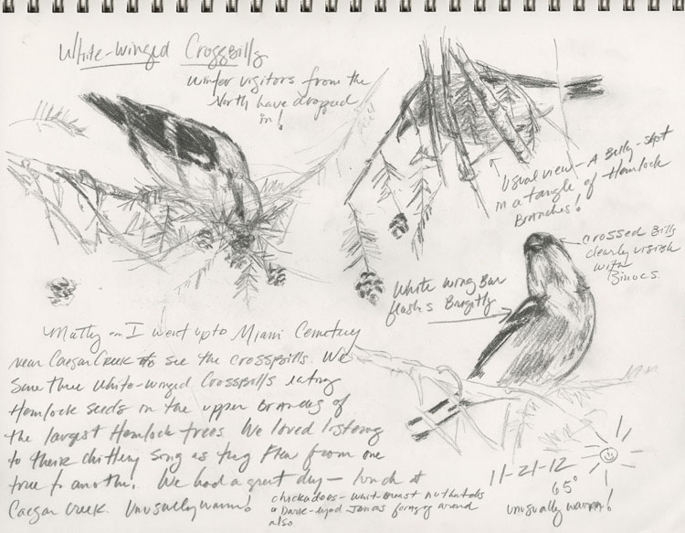 Pencil sketches and sketchbook entry of White-winged Crossbills by Kelly Riccetti
