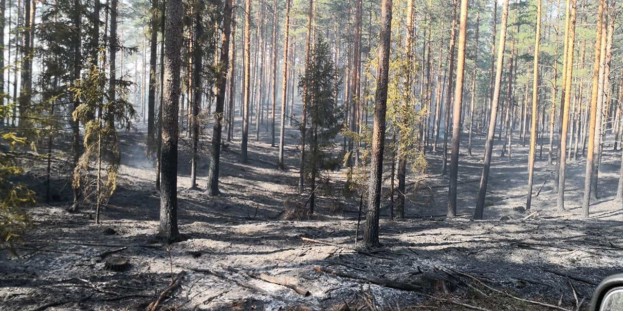 Likvidēti seši meža ugunsgrēki Kurzemē
