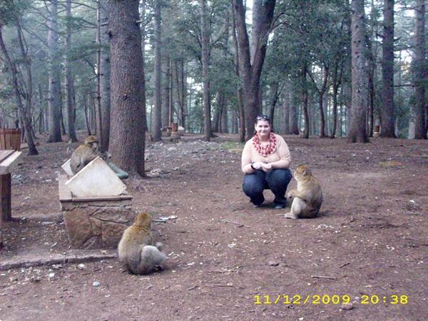 maimute-in-padurea-de-cedru-maroc