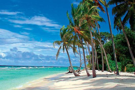 Explore The Beauty Of Caribbean: Tropical Paradise In Barbados