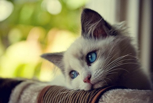 Cute Cat HD Pictures