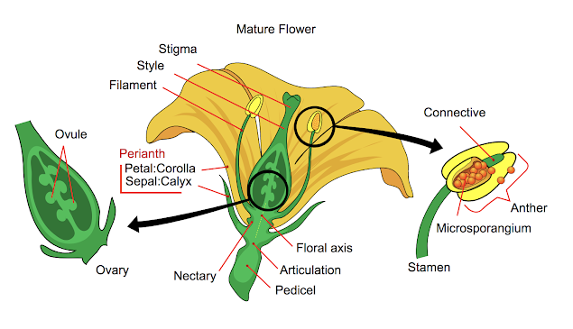 parts of a flower structure and function