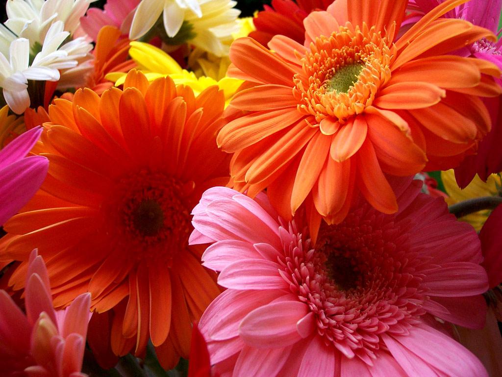 Flowers For Flower Lovers.: Flowers Beauty Desktop Wallpapers