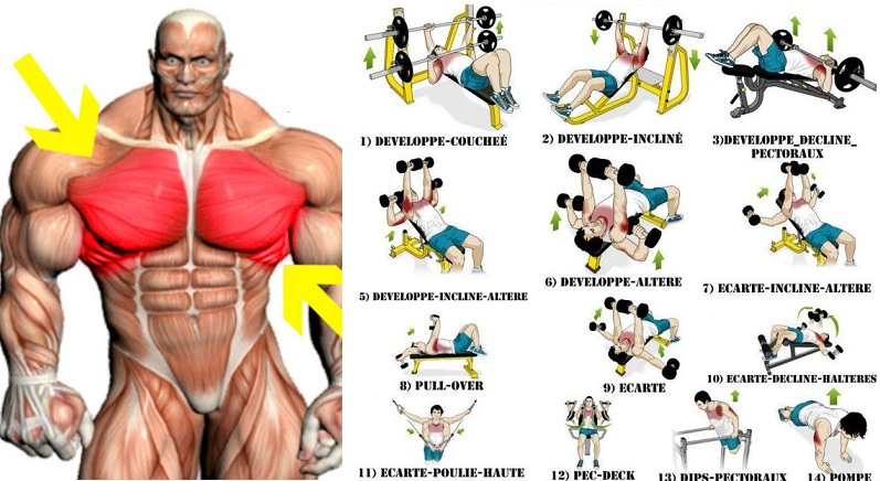 The Best Chest Workout For Mass