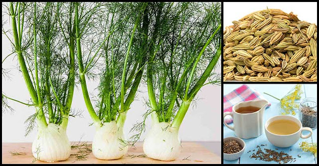 Fennel Tea For Digestive Problems