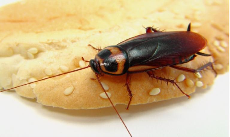 ماذا سيحدث لو اختفت الصراصير تماماً عن وجه الأرض .. ولماذا خلقت !!