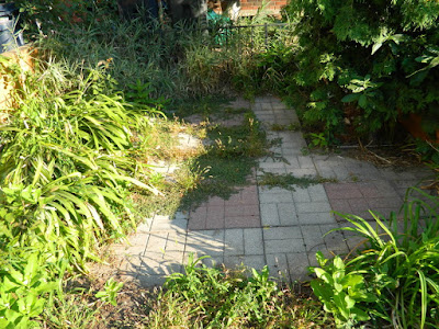 Little Portugal summer garden cleanup by Paul Jung Gardening Services Toronto before