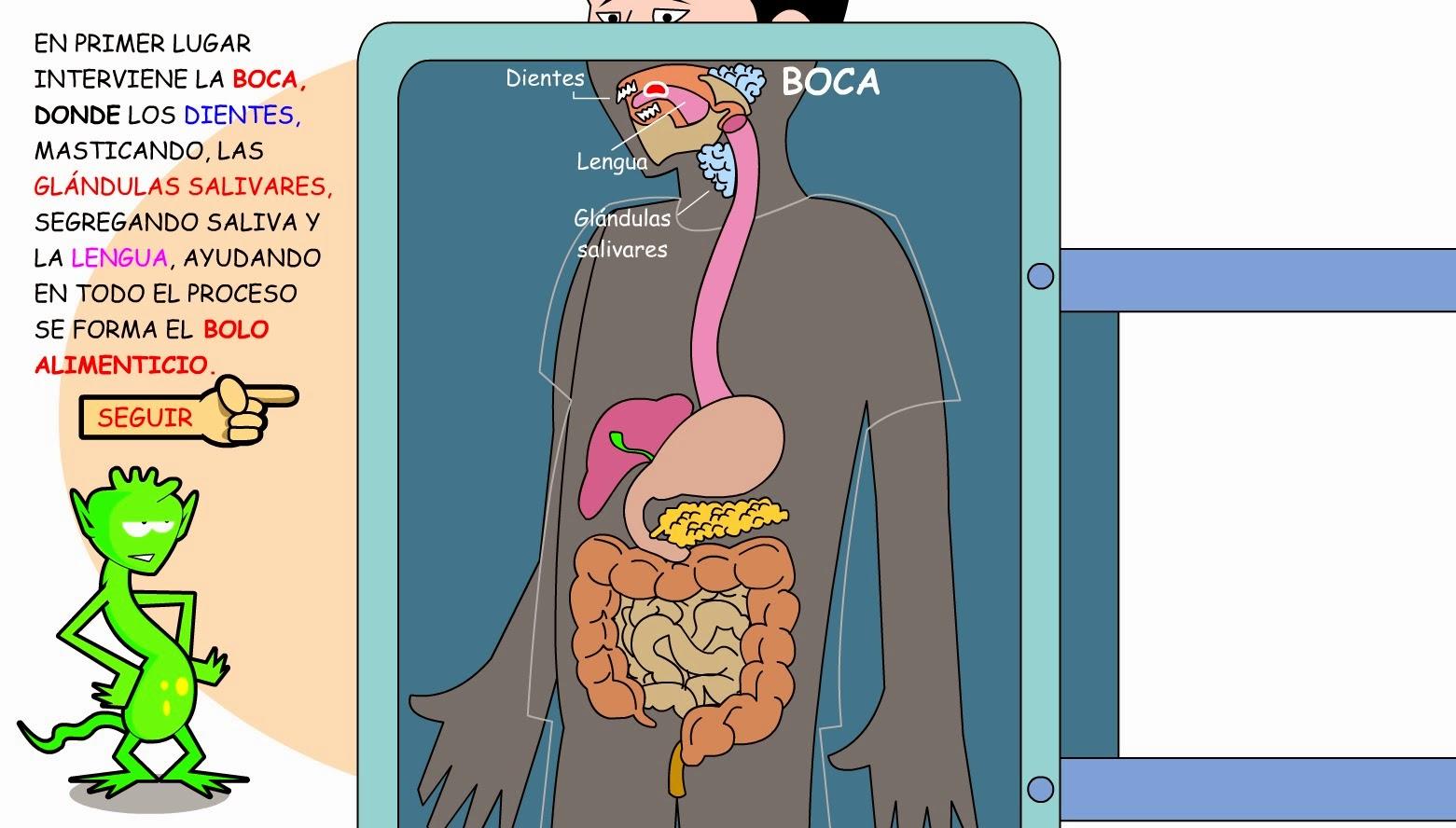 funciona pancreas: