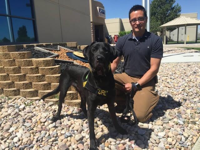 URL, el perro detective que detecta archivos para adultos