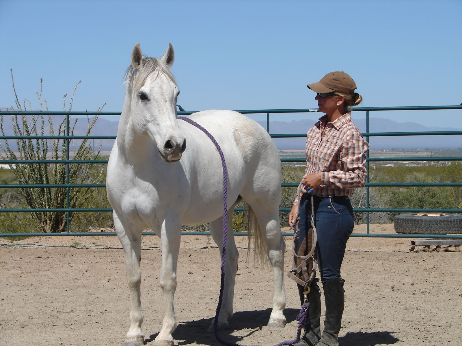 Horsemanship and Horse Behavior